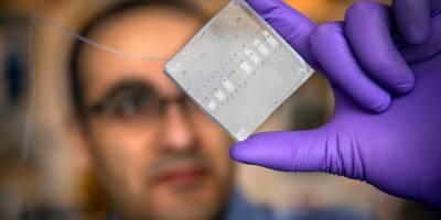 Food scientist works to improve nutrition, understand gut disease